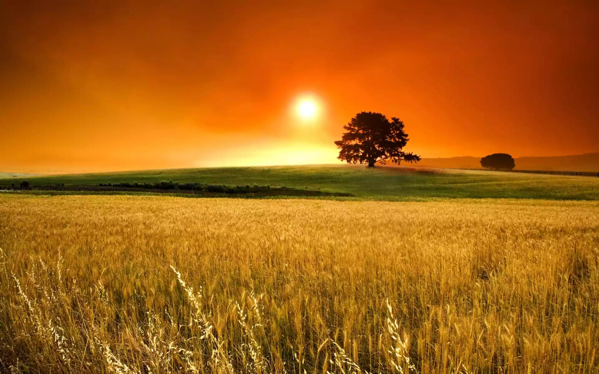 sun-over-wheat-field